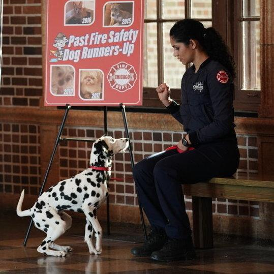 Chicago Fire Dog