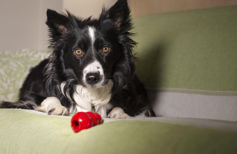 """<p>You want to keep your pets busy while you're away, and there are plenty of options. """"A <a href=""""https://www.womansday.com/life/pet-care/g28471378/interactive-dog-toys/"""" rel=""""nofollow noopener"""" target=""""_blank"""" data-ylk=""""slk:puzzle toy"""" class=""""link rapid-noclick-resp"""">puzzle toy</a> filled with treats can provide a mental challenge and tasty rewards,"""" Rawlinson says. <a href=""""https://www.womansday.com/life/pet-care/g26763903/most-indestructible-dog-toys/"""" rel=""""nofollow noopener"""" target=""""_blank"""" data-ylk=""""slk:Chew toys"""" class=""""link rapid-noclick-resp"""">Chew toys</a> can also be filled with treats for your dog to work on throughout the day. If your dog gets the treats quickly, you can freeze the prepared chew toy so it lasts longer. </p><p>Just make sure to put these toys away when you return home so that your dog associates them with alone time. Additionally, Coates suggests you """"rotate through several different types of food dispensing toys"""" to prevent boredom. <br></p>"""