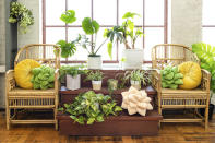 This photo provided by Green Philosophy Co. shows their soft plush pillows in the shape of a tropical leaf or succulent. They've partnered with nonprofit Trees for the Future, so pillow and throw sales support planting initiatives worldwide. (Sarah Eichstedt/Green Philosophy Co. via AP)