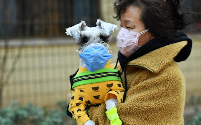 A woman with her pet dog, both wearing face mask - Getty Images Contributor