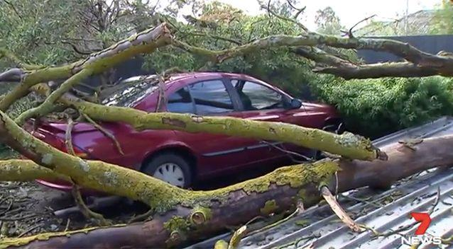 SES crews were kept busy, particularly with fallen trees. Source: 7 News