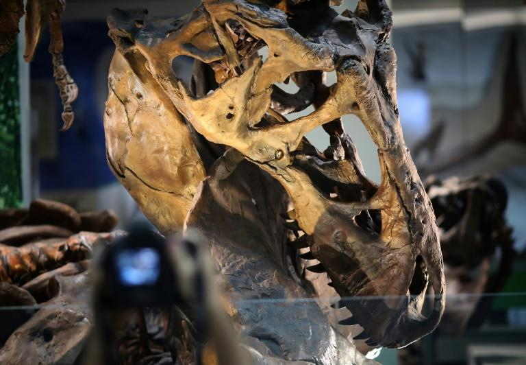A team of researchers have discovered new information about the Tyrannosaurus Rex aging process after determining that a pair of skeletons were adolescent T-rex, not a different species altogether