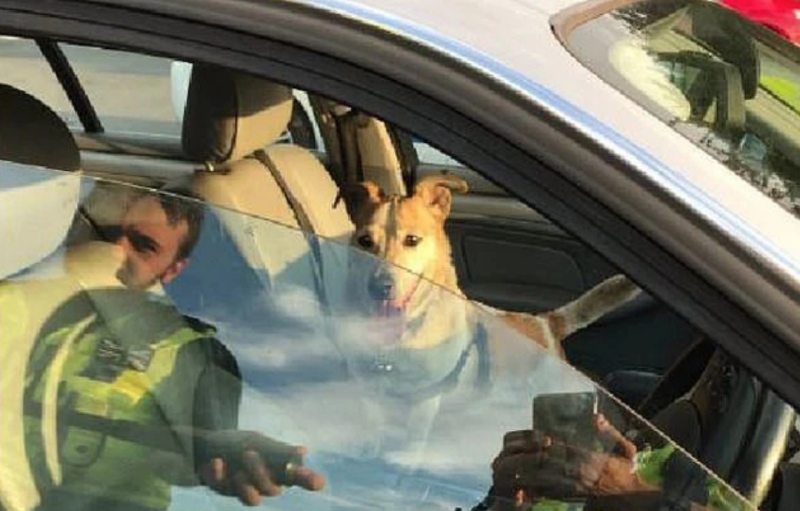 Police broke into a car in Leeds to save a dog trapped inside while its owner went shopping at Sainsbury's. (West Yorkshire Police)