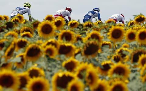 <span>Stage 11 of the Tour has allowed photographers to capture their first shots of the obligatory sunflowers </span> <span>Credit: REX FEATURES </span>