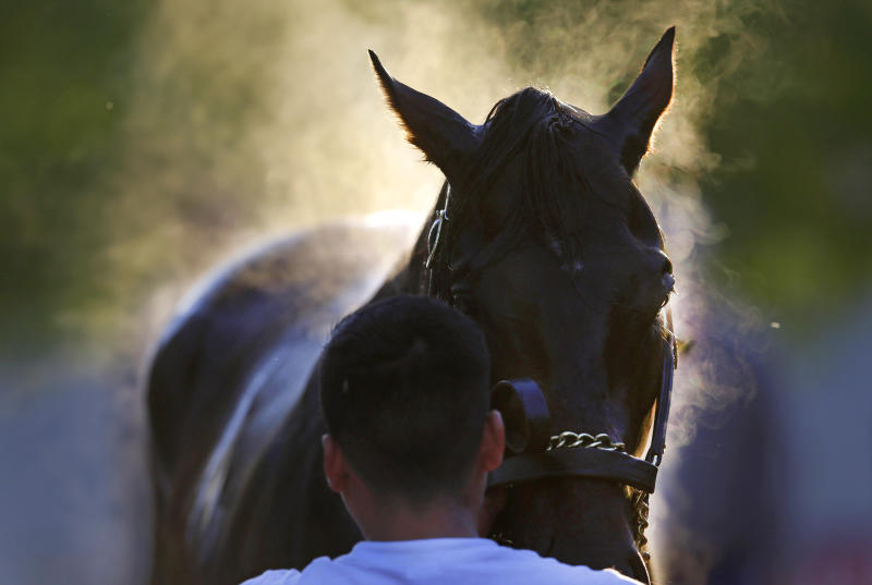 Steam rises from Kentucky Derby winner Orb as a groom washes him after a workout at Pimlico Race Course in Baltimore, Friday, May 17, 2013. The Preakness Stakes horse race is scheduled to take place May 18. (AP Photo/Patrick Semansky)