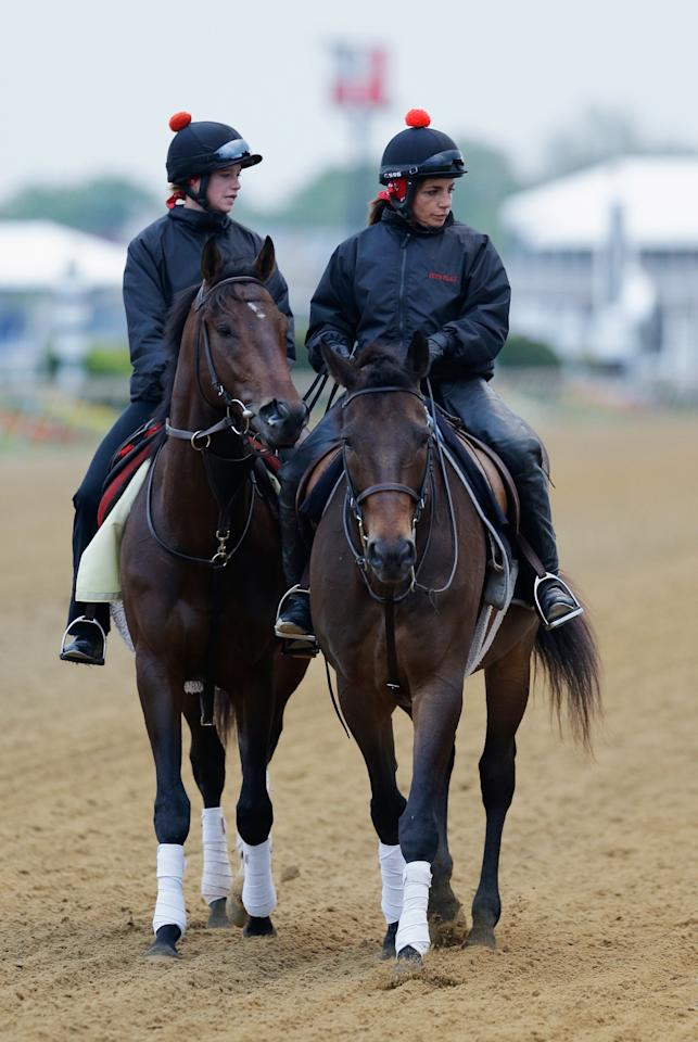 BALTIMORE, MD - MAY 15: Kentucky Derby winner Orb with exercise rider Jennifer Patterson up are lead off the track following a workout on the track  in preparation for the 138th Preakness Stakes at Pimlico Race Course on May 15, 2013 in Baltimore, Maryland.  (Photo by Rob Carr/Getty Images)