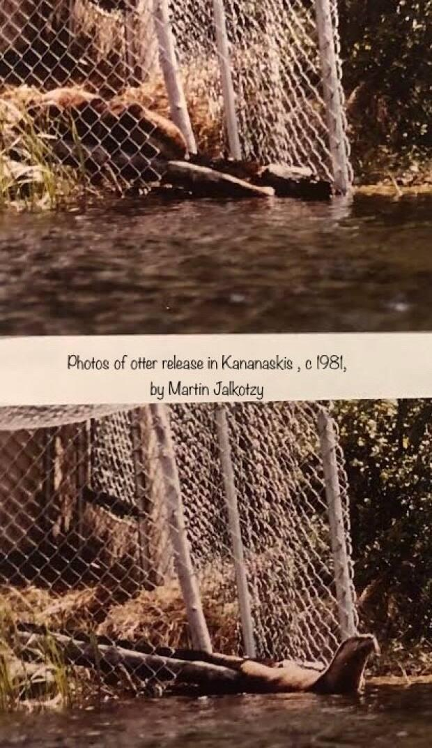These photos were captured during an otter release in 1981.