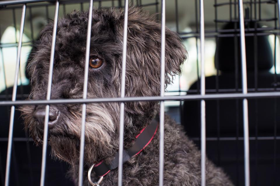 Dog inside travel cage as owners are urged to keep pets comfortable over holiday period.
