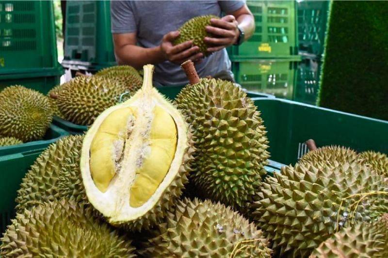 a shot of a cross section of a durian