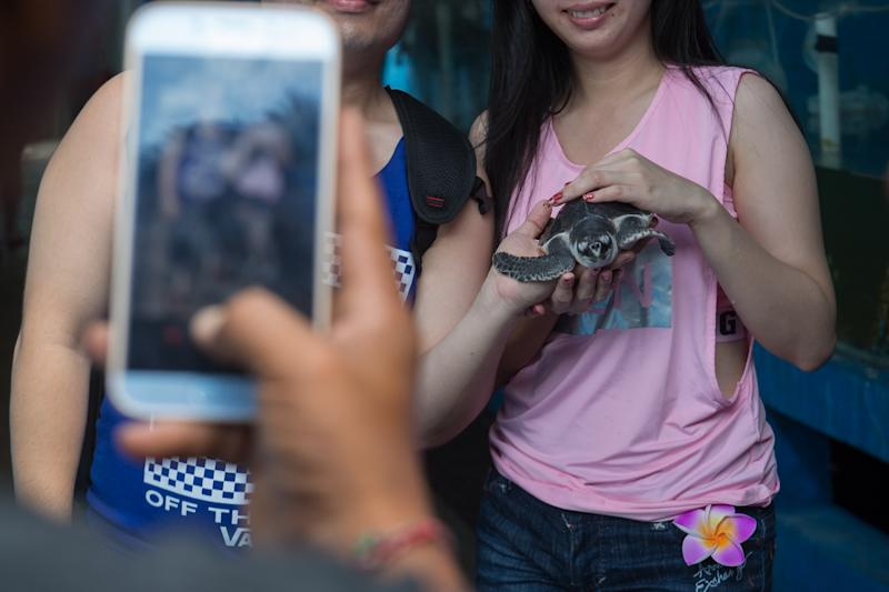 Two tourists pose in front of a mobile phone with a turtle.