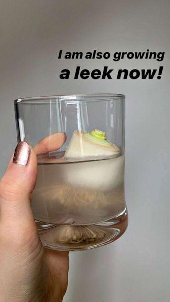 PHOTO: Lauren Goldstein, 23, is re-growing leeks in a cup of water at her family home in Jericho, NY. (Courtesy of Lauren Goldstein)