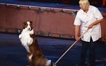 <p>The show's second dog act to claim a victory became surrounded by controversy as viewers felt 'duped' when it was later revealed that two other dogs had taken part in the act's final performance.</p><p>After receiving a horde of complaints, Ofcom ruled that BGT had misled viewers, but the dog act wasn't stripped of its title or prize money. </p><p>In December they appeared at the Royal Variety Performance, but were once again met by negativity from the viewing audience.</p><p>Most recently, Jules O'Dwyer and Matisse (& Co.) performed live on Britain's Got Talent semi-final, Wednesday night (May 25).</p><p><i>Picture Credit: Syco/Thames/Dymond</i></p>