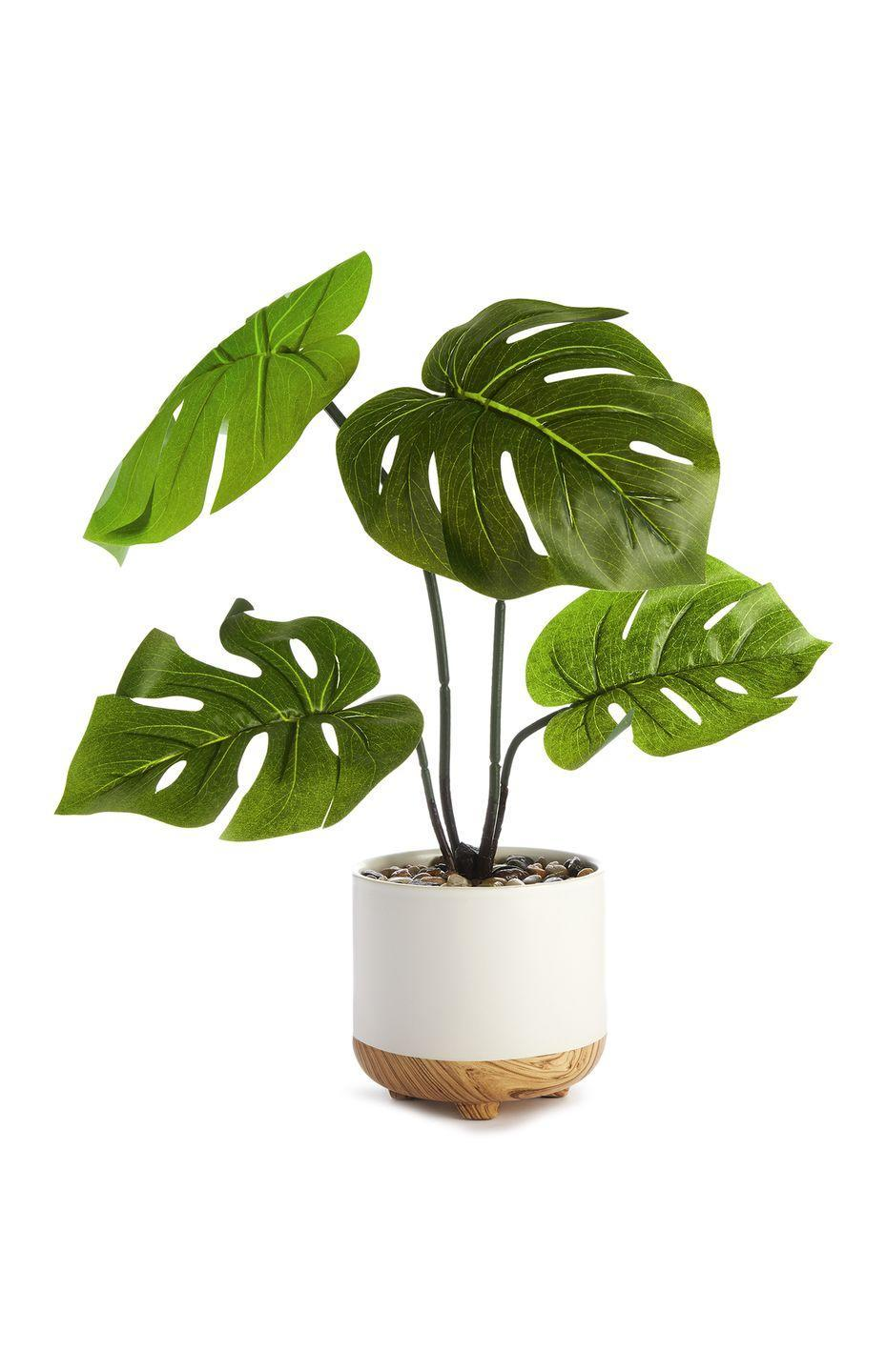 <p>Faux cheese plant in pot, £10.00</p>
