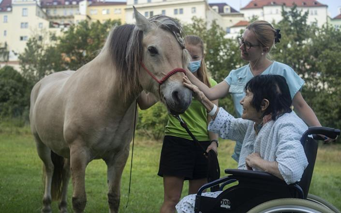 Horse therapy - Getty