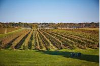 """<p>What's a staycation without some wine? The<a href=""""https://ctwine.com"""" rel=""""nofollow noopener"""" target=""""_blank"""" data-ylk=""""slk:Connecticut Wine Trail"""" class=""""link rapid-noclick-resp""""> Connecticut Wine Trail</a> is a vino-lover's dream. Just look at a map of <a href=""""https://ctwine.com/wineries/"""" rel=""""nofollow noopener"""" target=""""_blank"""" data-ylk=""""slk:Connecticut's best wineries"""" class=""""link rapid-noclick-resp"""">Connecticut's best wineries</a> and you'll be floored by all the options that are open for tastings year-round. <a href=""""https://hummockisland.com"""" rel=""""nofollow noopener"""" target=""""_blank"""" data-ylk=""""slk:Hummock Island"""" class=""""link rapid-noclick-resp"""">Hummock Island </a>in Westport offers a great oyster tour that will turn anyone into a true bivalve believer. Lastly, taking a train from the <a href=""""https://essexsteamtrain.com"""" rel=""""nofollow noopener"""" target=""""_blank"""" data-ylk=""""slk:Essex Steam Train & Riverboat"""" class=""""link rapid-noclick-resp"""">Essex Steam Train & Riverboat</a> company in Essex is a fun family-oriented activity. In addition to sightseeing, there are different happenings available onboard, from dinners to murder mystery shows. </p>"""