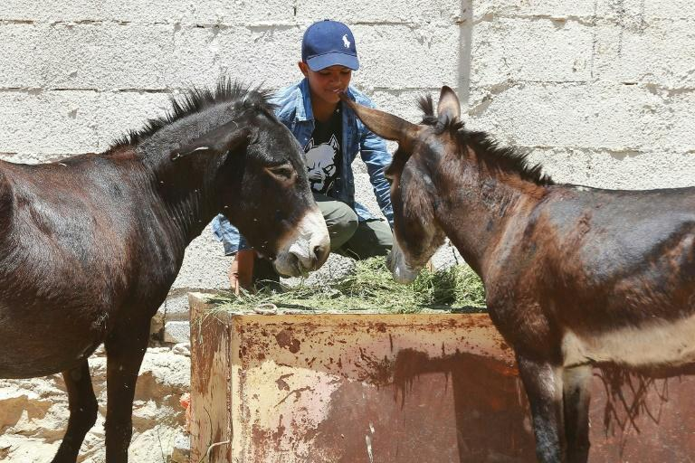 Jordanian donkey owner Abdulrahman Ali brings his animals to a clinic supported by the animal rights group PETA, where vets treat maltreated and malnourished donkeys for free
