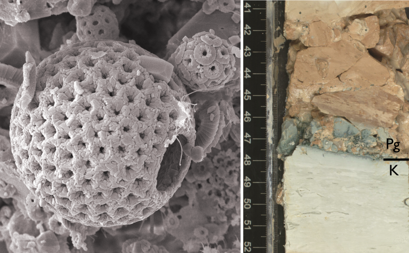 A microscopic image of the marine fossils examined by researchers.