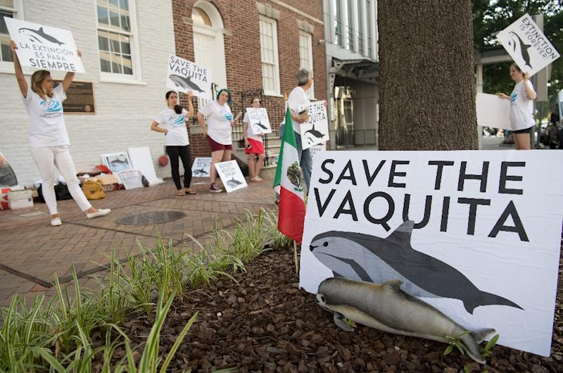 Animal Welfare Institute members rally outside the Mexican Embassy in Washington DC in July 2018 to help save the endangered vaquita porpoise (AFP Photo/SAUL LOEB)