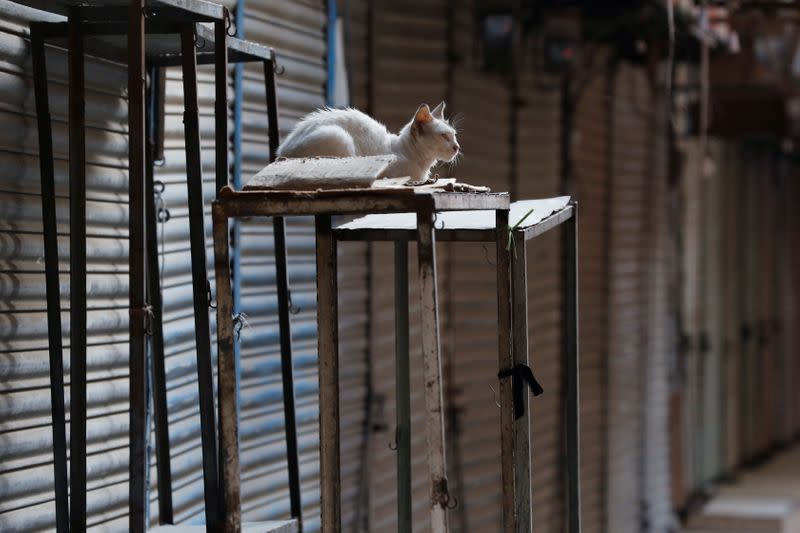 A cat is seen at a closed market during a contrywide strike in Karachi,
