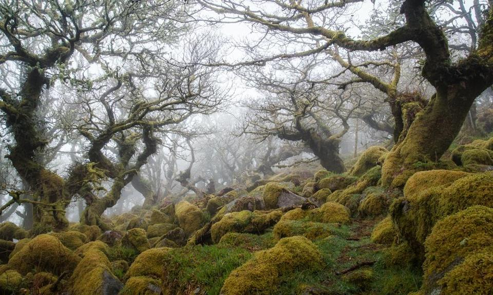 <span>Photograph: Devon and Cornwall Photography/Getty</span>