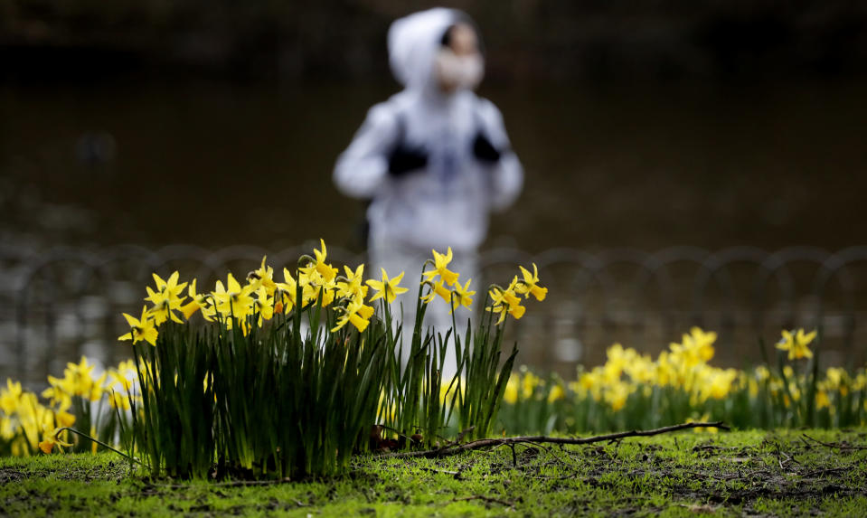 A pedestrian wearing a face covering due to the Covid-19 pandemic walks past blooming daffodils in a park in London, Friday, Feb. 19, 2021 as the lockdown in Britain continues. Britain has given a first vaccine shot to over 15 million people, almost a quarter of the population. (AP Photo/Frank Augstein)