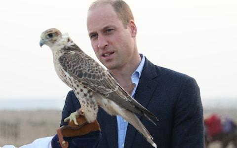 The Duke of Cambridge looks at a bird of prey during a reception hosted by Sheikh Mohamed Abdullah in the Kuwaiti Desert - Credit: PA
