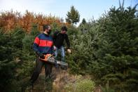 Farmer Christos Bitsios and a worker holding a chainsaw gather fir trees, grown to be sold as Christmas trees, at a farm in the village of Taxiarchis, during the coronavirus disease (COVID-19) pandemic, in the region of Chalkidiki