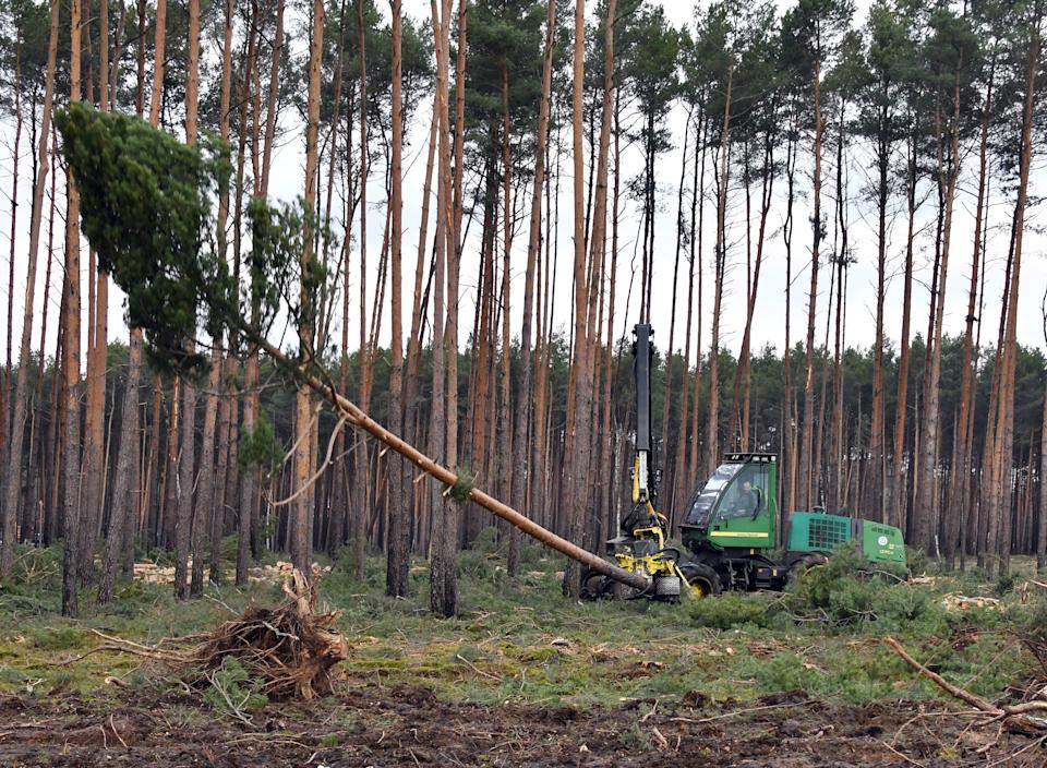 21 February 2020, Brandenburg, Grünheide: The clearing work on the site for the future Tesla plant has started again. Tesla is planning to build a gigafactory on this site, east of the A10 Berlin Ring motorway in the municipality of Grünheide. In a first phase from summer 2021, 150,000 Model 3 and Y electric cars are to be built there annually. Photo: Bernd Settnik/dpa-Zentralbild/dpa (Photo by Bernd Settnik/picture alliance via Getty Images)
