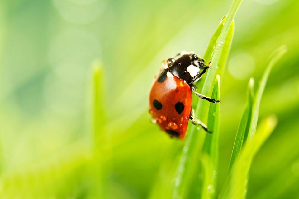 <p><strong>Ladybug</strong> <br><br>Make a wish if you see this state bug out in the wild. </p>