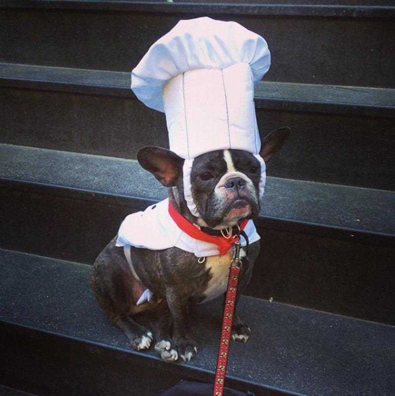 "<p>If your dog's a food lover, this might be the perfect costume. Just make sure he's making you dinner before he goes trick-or-treating. <b>Looking for this costume? <a href=""http://www.amazon.com/Chef-Dog-Costume-Extra-Small/dp/B003XIPW86/ref=sr_1_cc_5?s=aps&ie=UTF8&qid=1444151674&sr=1-5-catcorr&keywords=chef+costume+pet"" rel=""nofollow noopener"" target=""_blank"" data-ylk=""slk:Try this!"" class=""link rapid-noclick-resp"">Try this!</a> </b><i>Photo: Instagram/ @evanrosskatz</i></p>"