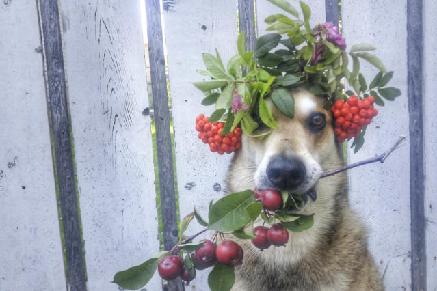 <p>Toby balances flowers and fruit. (Photo: Pat Langer/Caters News) </p>