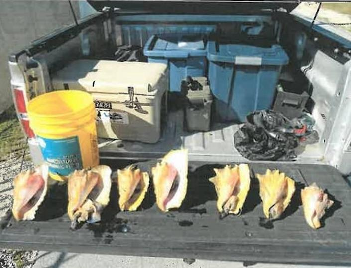 A Florida Keys man was sentenced to 10 days in jail for possession seven queen conch.