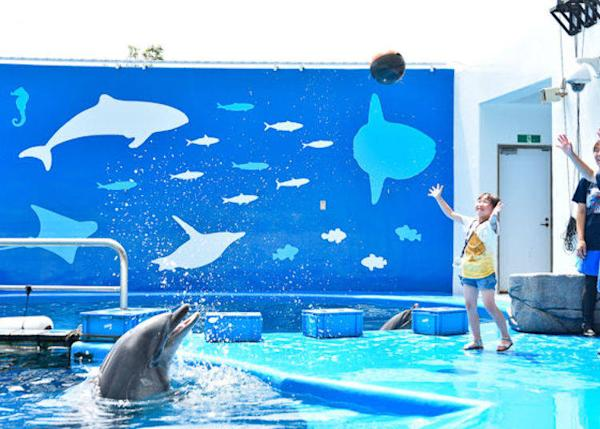 ▲ You can throw a ball to a dolphin and it will toss it back to you. How well can you catch it?