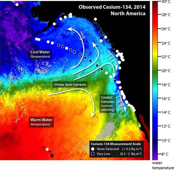 Circles indicate the locations where water samples were collected. White circles indicate that no cesium-134 was detected. Blue circles indicate locations were low levels of cesium-134 were detected. Colors indicate ocean temperature measured t
