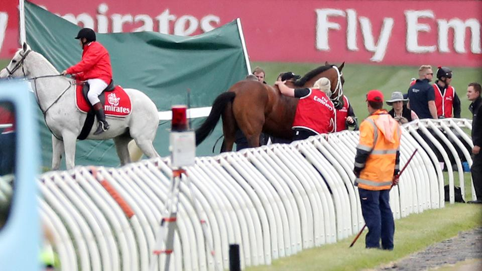 Regal Monarch, pictured here after falling in Race 4 on Melbourne Cup day in 2017.