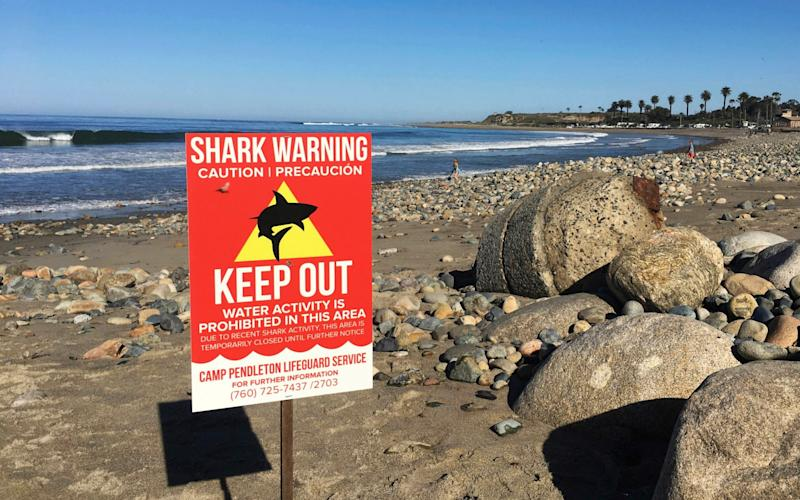 A sign warns beach goers at San Onofre State Beach after a woman was attacked by a shark in the area - Credit: AP