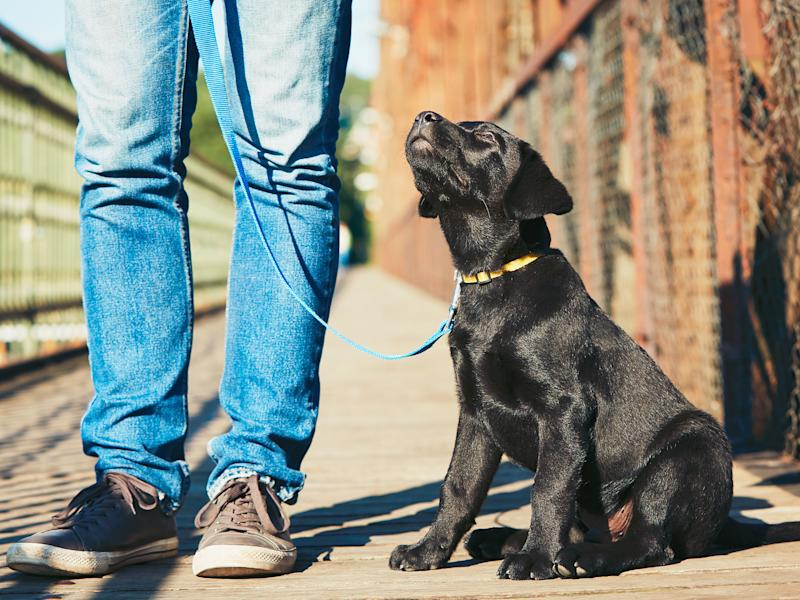 Dog walkers could also face fines if they do not carry something to clean up after their pet: iStock