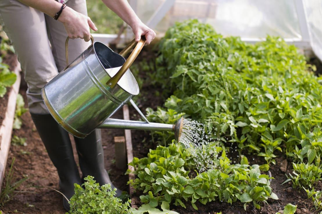 "<p>Of course, not all crops are able to withstand the colder temperatures, so you will need to grow a few things in the greenhouse, including:</p><p>8. Winter salads. <br>Salad leaves are definitely not just for summer, as you can add hot additions to make nutritious and delicious meals. Not only that, but winter salads are a replenishing crop that keep growing back! What great value for money, as well as a simple thing to grow!</p><p>9. Carrots. <br>Who doesn't love fresh and crunchy carrots? If you plant in early November, you could be enjoying your own by July, depending on the varieties that you select. By growing them in a greenhouse, you won't need to worry about rabbits or other cheeky little garden pests either!</p><p>10. Pak Choi. <br>An amazing source of vitamins A and C as well as calcium, iron and folic acid, Pak Choi is such a versatile leafy green that you'll be spoilt for choice as to things to do with it! Great in salads, curries and stews, it has a subtle but delicious flavour and is a piece of cake to grow too.</p><p>For more growing inspiration, take a look at this Ideabook: <a rel=""nofollow"" href=""https://www.homify.co.uk/ideabooks/267135/ever-wanted-your-own-herb-garden-at-home"">Ever wanted your own herb garden at home?</a></p>  Credits: homify / press profile homify"