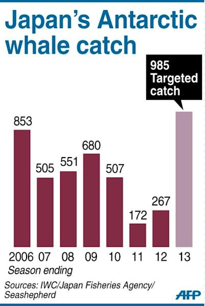 Graphic charting Japan's whale catch in the Antarctic since 2006