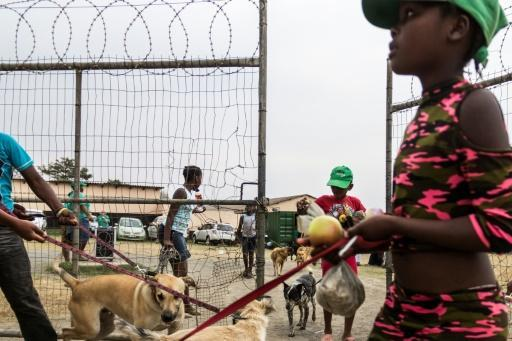 <p>Dogs shielding S.Africa's youth from township violence</p>