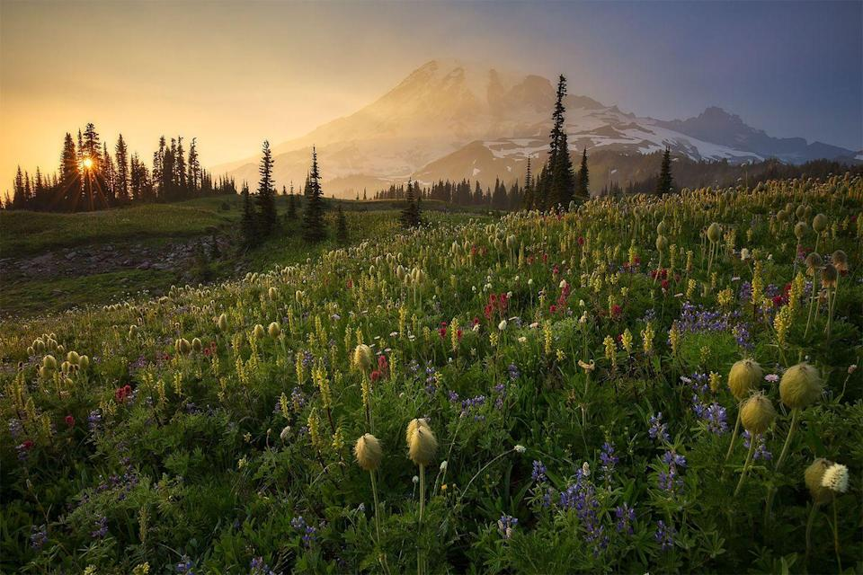 <p>Wild flowers stand tall in Mount Rainier National Park, Washington // Date unknown</p>