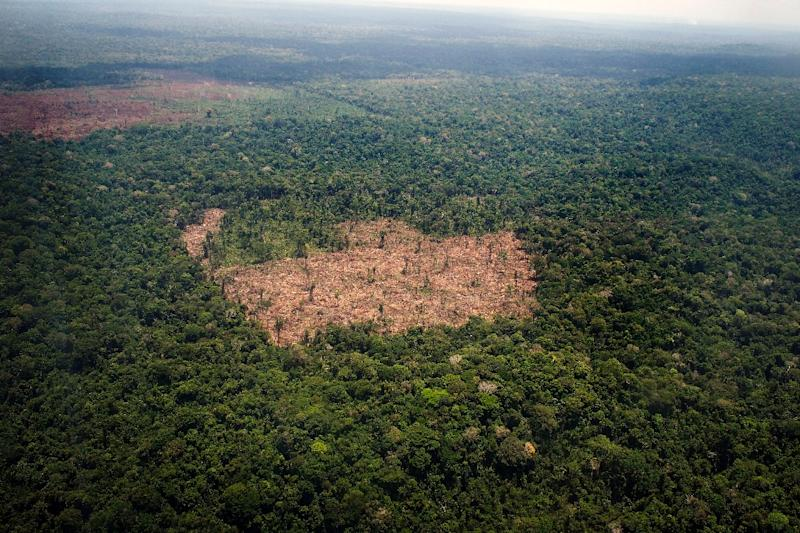 View of a deforested area in the middle of the Amazon jungle (AFP Photo/Raphael Alves)