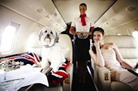 <strong>Pudsey flies on Simon Cowell's private jet</strong> It was one thing for this cute pooch Pudsey to celebrate after he and his owner, Ashleigh Butler, took out the grand prize on Britain's Got Talent 2012. It was quite another to then score a ride on Simon Cowell's private jet to LA, New York and Las Vegas earlier this year. Who would've thought Simon had such a soft spot for little fluffy Pudsey. <b>Photo: Learjet</b>
