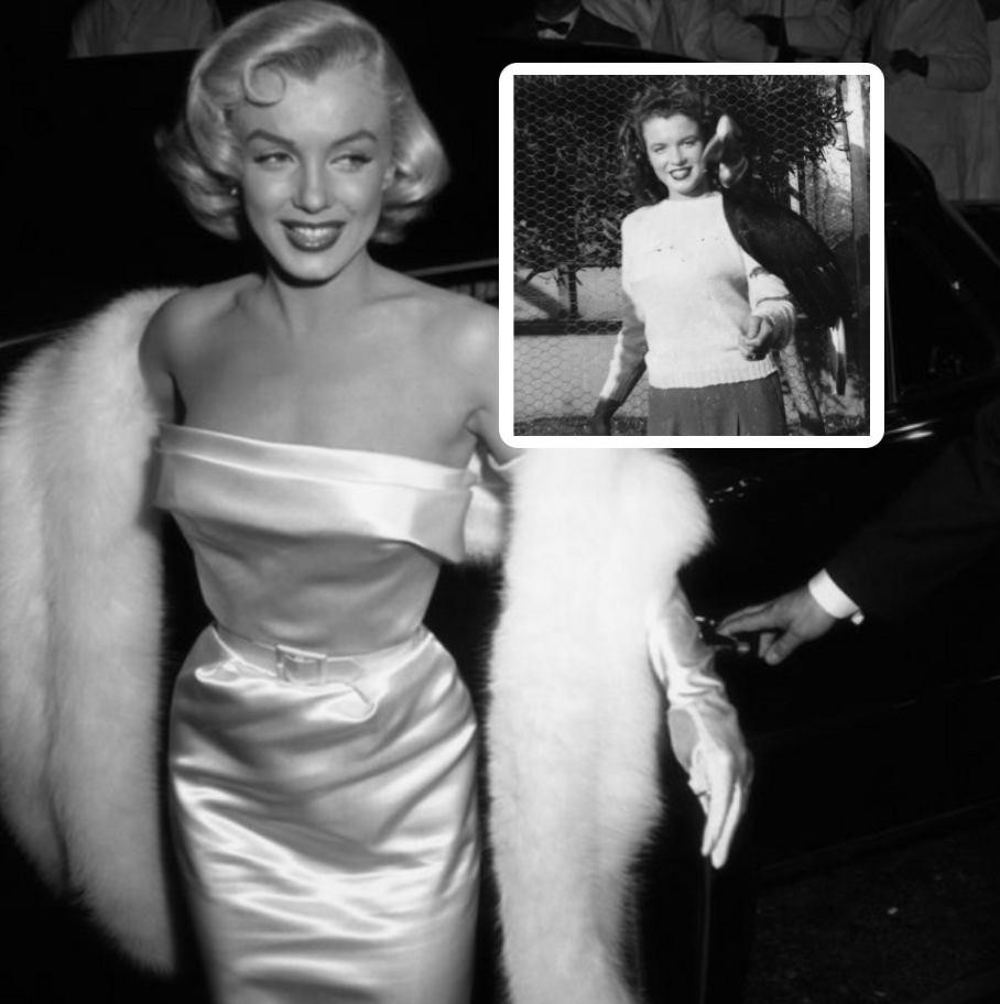 <p>The names Marilyn Monroe, James Dean and Lucille Ball, among others, are synonymous with fame and fortune. They go beyond just being actors, singers and performers and forever live on as pop culture icons. But given their legendary status, it's easy to forget that before these entertainers became shining Hollywood stars, they were just ordinary people with a glimmer of hope and a dream. From Marilyn Monroe getting her start as a brunette model to Humphrey Bogart's early days in the Navy, let's take a revealing peek behind the flashing cameras and explore old Hollywood stars before they were famous. </p>