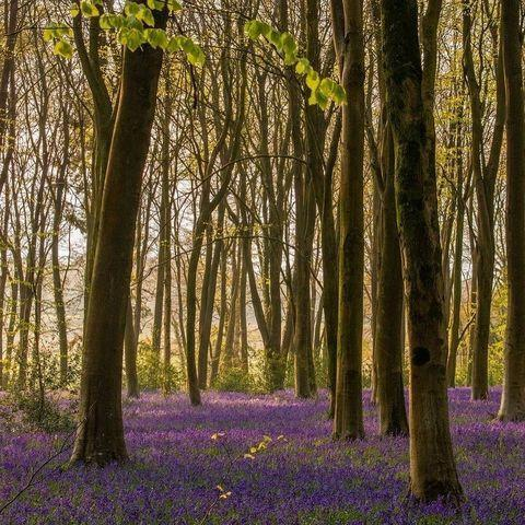 """<p>Micheldever Woods in Hampshire is one of the best places to see the blossoming bluebells. Predominantly a beech wood, it's home to diverse range of <a href=""""https://www.countryliving.com/uk/wildlife/countryside/a36158435/garden-birds-homebase-home-for-all-campaign/"""" rel=""""nofollow noopener"""" target=""""_blank"""" data-ylk=""""slk:birds"""" class=""""link rapid-noclick-resp"""">birds</a>, insects and wildlife. A visit here is certain to lift your spirits. </p><p><strong>Like this article? <a href=""""https://hearst.emsecure.net/optiext/cr.aspx?ID=zsATrj4qAwL7PXfHOfbti0xjie5wOfecvOt8e1A3WvL5x0TsMrTgu8waUpN%2BcCNsV3wq_zCaFTleze"""" rel=""""nofollow noopener"""" target=""""_blank"""" data-ylk=""""slk:Sign up to our newsletter"""" class=""""link rapid-noclick-resp"""">Sign up to our newsletter</a> to get more articles like this delivered straight to your inbox.</strong></p><p><a class=""""link rapid-noclick-resp"""" href=""""https://hearst.emsecure.net/optiext/cr.aspx?ID=rEIqRuDcS16UGvb2CsG9coU7Y5ojOQn7P8im9ejs0NiFp18n8XFjb_nzImbDz5wFw3EeZozf_PGbri"""" rel=""""nofollow noopener"""" target=""""_blank"""" data-ylk=""""slk:SIGN UP"""">SIGN UP</a></p><p><strong>Looking for some positivity? Get </strong><strong>Country Living</strong><strong> magazine posted through your letterbox every month.</strong> </p><p><a class=""""link rapid-noclick-resp"""" href=""""https://go.redirectingat.com?id=127X1599956&url=https%3A%2F%2Fwww.hearstmagazines.co.uk%2Fcl%2Fcountry-living-magazine-subscription-website&sref=https%3A%2F%2Fwww.countryliving.com%2Fuk%2Fwildlife%2Fcountryside%2Fg36350167%2Fflower-field%2F"""" rel=""""nofollow noopener"""" target=""""_blank"""" data-ylk=""""slk:SUBSCRIBE NOW"""">SUBSCRIBE NOW</a> </p><p><a href=""""https://www.instagram.com/p/COcVU-dJYgf/"""" rel=""""nofollow noopener"""" target=""""_blank"""" data-ylk=""""slk:See the original post on Instagram"""" class=""""link rapid-noclick-resp"""">See the original post on Instagram</a></p>"""
