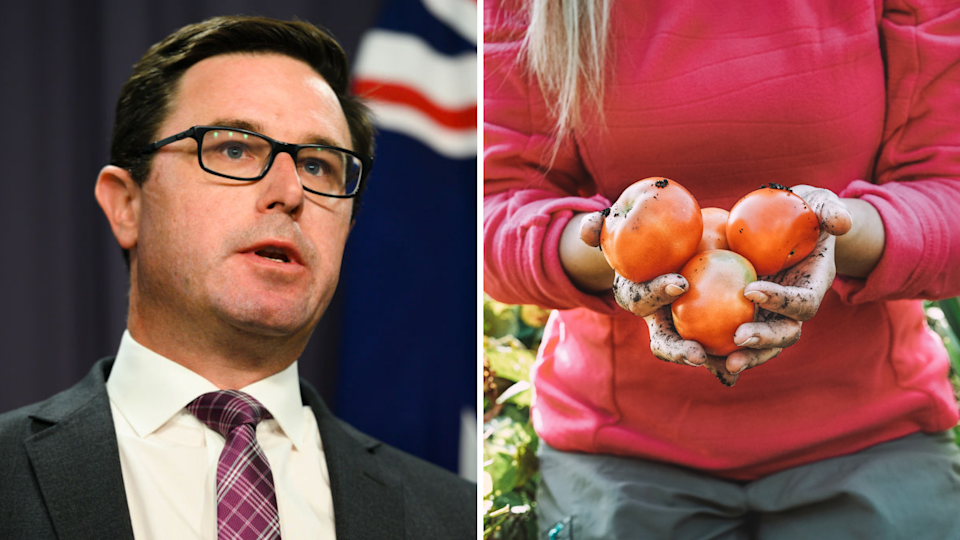 Agriculture Minister David Littleproud, close-up of farm worker on Australian farm holding three tomatoes.