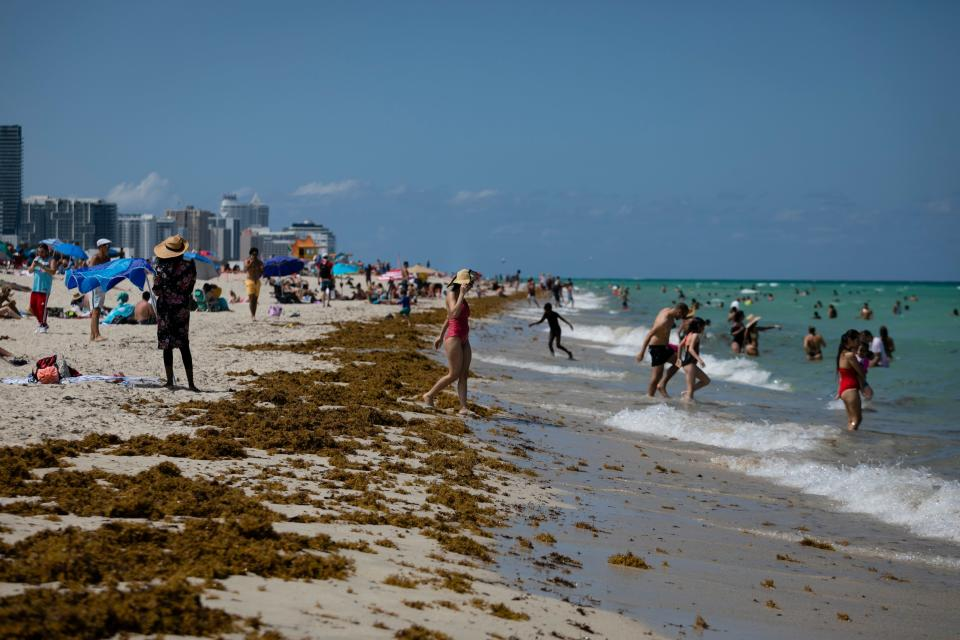 Florida is reporting record daily totals of new coronavirus cases. (Eva Marie Uzcategui/AFP via Getty Images)