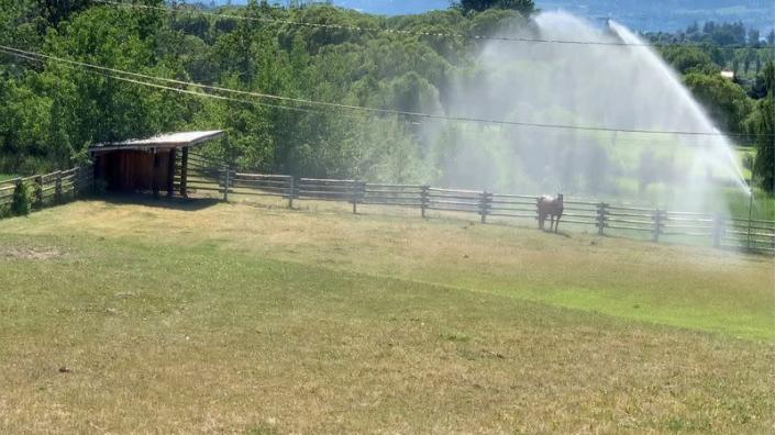 FILE PHOTO: Sprinklers spray water on a horse amid a heatwave in Kelowna, British Columbia, Canada