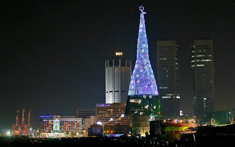 Image result for christmas tree in sri lanka