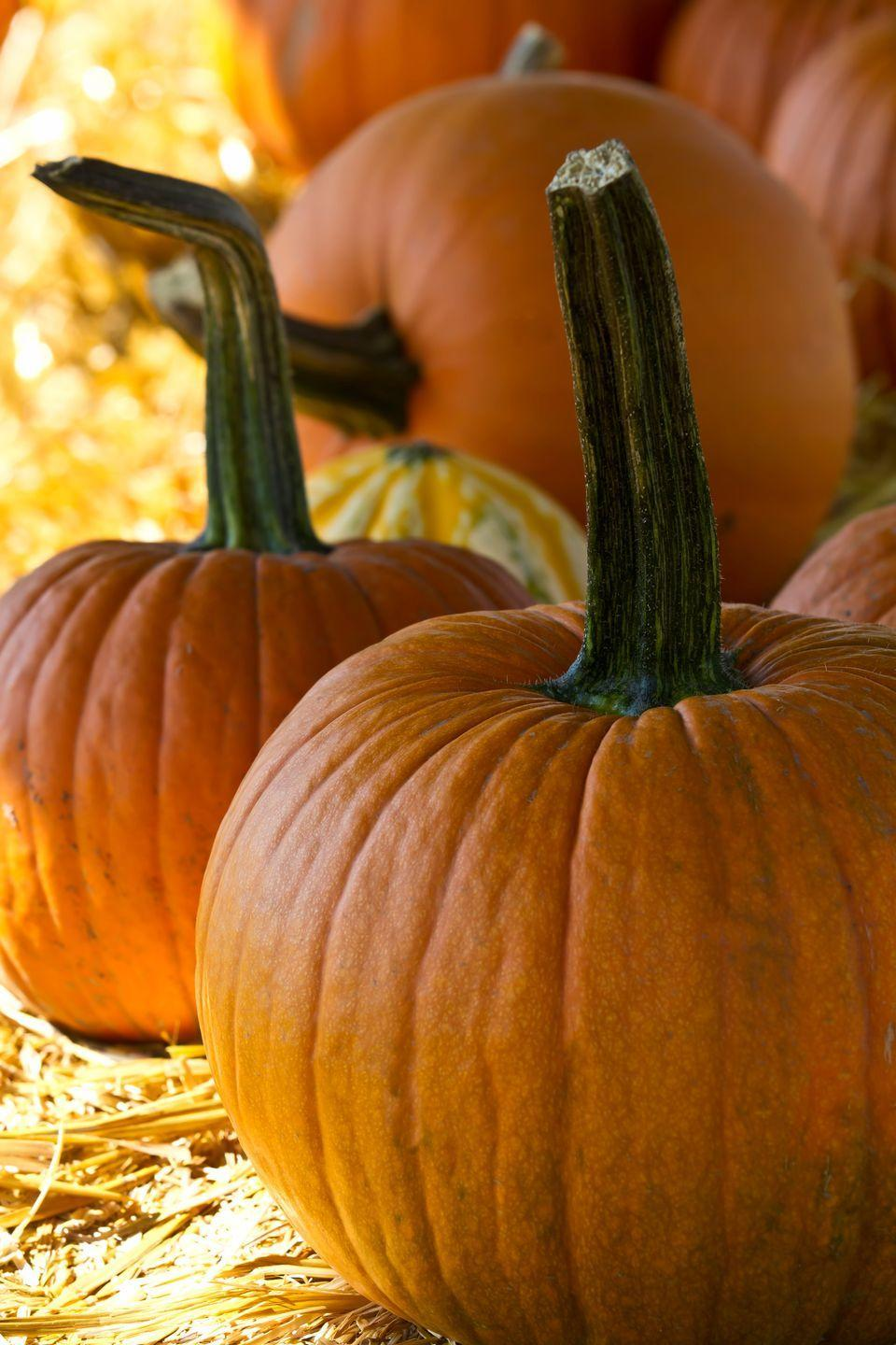 """<p>The town of Morton is the <a href=""""http://chicago.cbslocal.com/2014/09/19/morton-illinois-is-the-pumpkin-capital-of-the-world-or-is-it/"""" rel=""""nofollow noopener"""" target=""""_blank"""" data-ylk=""""slk:&quot;Pumpkin Capital of the World.&quot;"""" class=""""link rapid-noclick-resp"""">""""Pumpkin Capital of the World.""""</a> It's mainly due to the presence of the Libby's canning plant that cans more than 82% of canned pumpkin in the world.</p><p><span class=""""redactor-invisible-space""""><strong>RELATED: </strong></span><span class=""""redactor-invisible-space""""><a href=""""https://www.goodhousekeeping.com/holidays/halloween-ideas/g23480666/pumpkin-patch-near-me/"""" rel=""""nofollow noopener"""" target=""""_blank"""" data-ylk=""""slk:The Best Pumpkin Patch Near Me in Every State"""" class=""""link rapid-noclick-resp"""">The Best Pumpkin Patch Near Me in Every State</a></span></p>"""